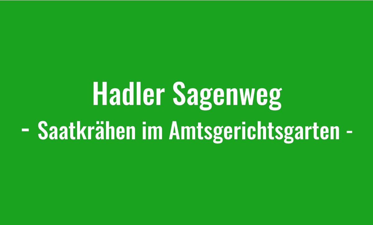 Hadler Sagenweg - Saatkrähen im Amtsgerichtsgarten