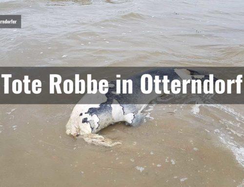 Tote Robbe in Otterndorf gefunden