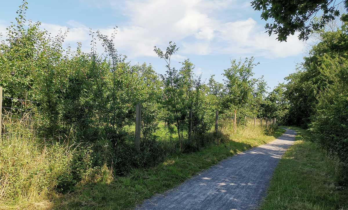 Norderteiler Deichweg in Otterndorf