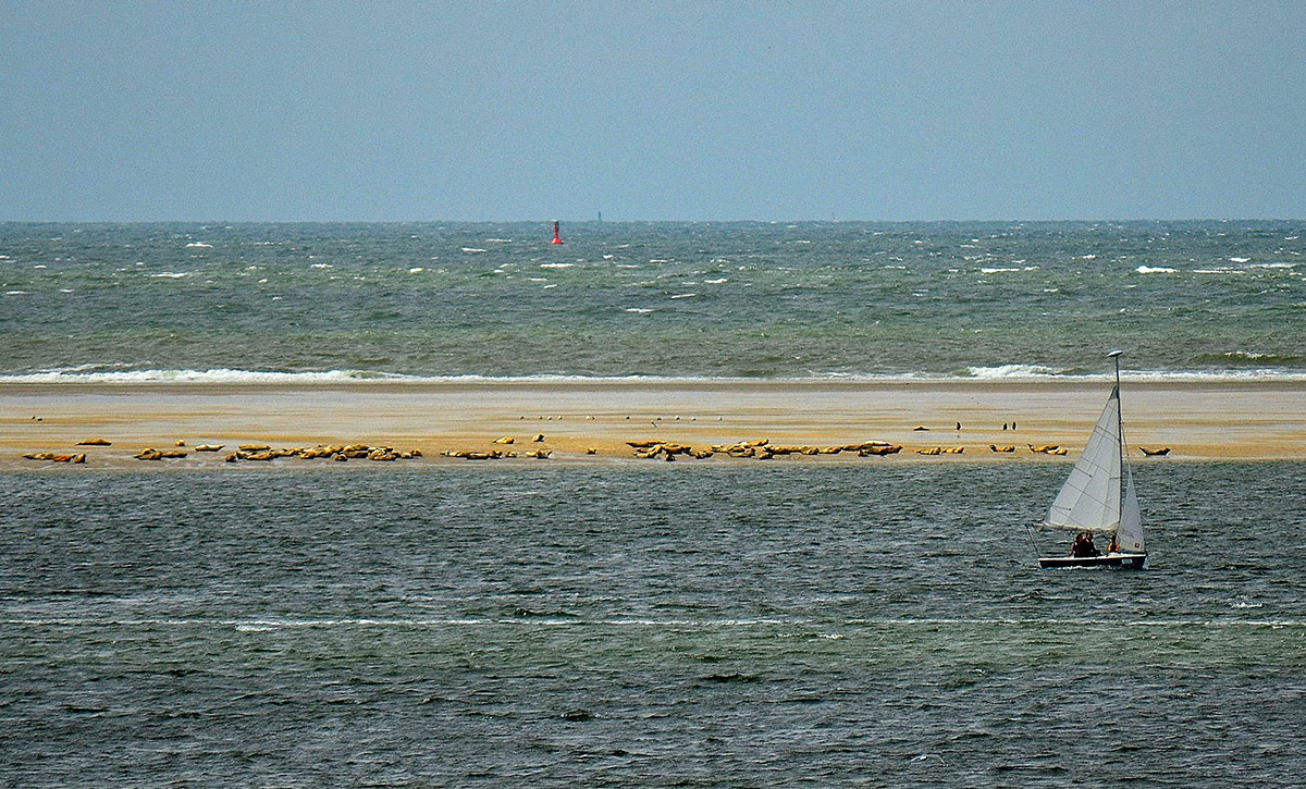 Seehundbank in Nordsee