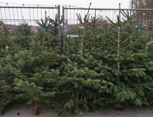 Weihnachtsbaumverkauf 2020 in Otterndorf